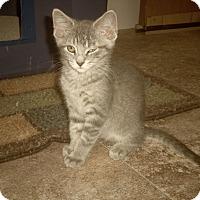 Adopt A Pet :: LIAM - Medford, WI