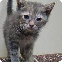Adopt A Pet :: Bell - Gary, IN