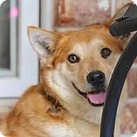Adopt A Pet :: Lucy Ann~new video! - Glastonbury, CT