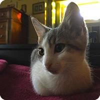 Adopt A Pet :: Julie - Philadelphia, PA