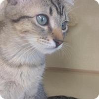Adopt A Pet :: Shadow - Walnut Creek, CA