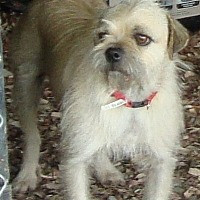 Terrier (Unknown Type, Medium) Dog for adoption in Columbia, Kentucky - Earl