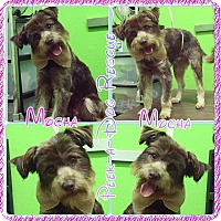 Adopt A Pet :: Mocha - South Gate, CA