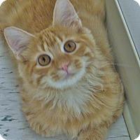 Adopt A Pet :: Gouda - Chambersburg, PA