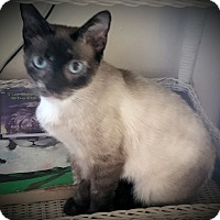 Adopt A Pet :: Bellamy - Fairborn, OH