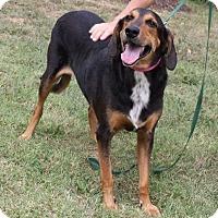 Adopt A Pet :: Roderick - Staunton, VA