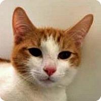 Adopt A Pet :: Roxas - Prescott, AZ