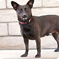 Adopt A Pet :: Benny - Coronado, CA