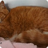 Adopt A Pet :: Orla - Spring Brook, NY
