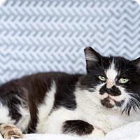 Adopt A Pet :: Tommy - Montclair, CA