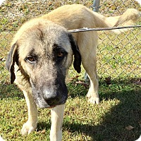 Adopt A Pet :: Draven - Sparta, NJ