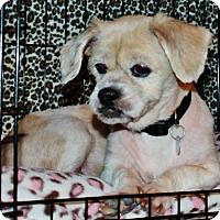 Adopt A Pet :: Juli-Anna - Irvine, CA