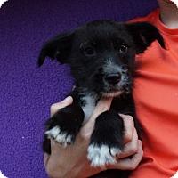 Adopt A Pet :: Dasher - Oviedo, FL
