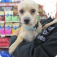 Adopt A Pet :: Mobely - Rocky Mount, NC