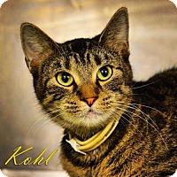 Adopt A Pet :: Kohl - Tremont, IL