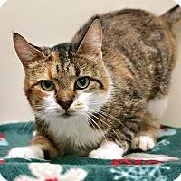 Adopt A Pet :: Marla - Bellingham, WA