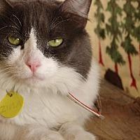 Adopt A Pet :: Zima - Tucson, AZ