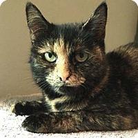 Adopt A Pet :: Brenda - Merrifield, VA