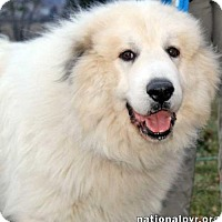 Adopt A Pet :: Dylan in PA - Beacon, NY