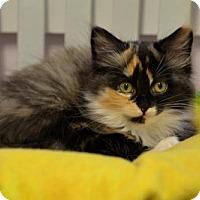 Adopt A Pet :: Woolie - Waxhaw, NC