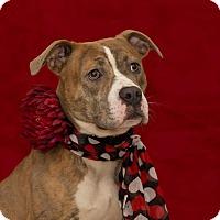 Adopt A Pet :: Athena - Flint, MI