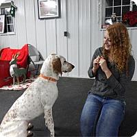 Adopt A Pet :: Dixie - Westfield, NY