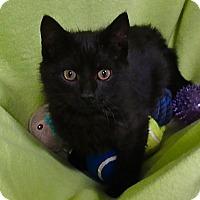 Adopt A Pet :: Junior - Lansing, KS