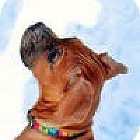 Adopt A Pet :: Buttercup - Sunderland, MA