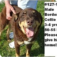 Adopt A Pet :: # 127-11 - ADOPTED! - Zanesville, OH