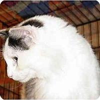 Adopt A Pet :: Paige & Piper - Chesapeake, VA