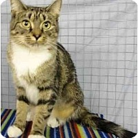 Adopt A Pet :: Roxie - Mission, BC
