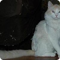 Adopt A Pet :: Washburn - Ennis, TX