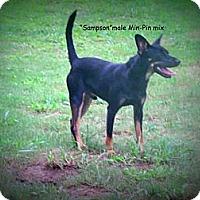 Adopt A Pet :: Sampson - Gadsden, AL