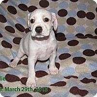 Adopt A Pet :: Charlie - Hazard, KY