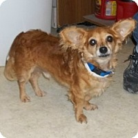 Adopt A Pet :: Buster Brown - Lockhart, TX