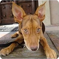 Adopt A Pet :: WHITNEY - Houston, TX
