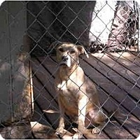 Adopt A Pet :: Mr. Wilson - HOBOKEN, GA