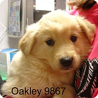 Adopt A Pet :: Oakley - baltimore, MD