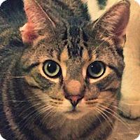 Adopt A Pet :: Len - Green Bay, WI
