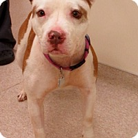 Adopt A Pet :: Eve *~Courtesy Post~* - Mount Juliet, TN