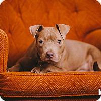 Adopt A Pet :: Roo Roo - Portland, OR