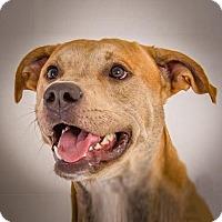 Adopt A Pet :: Clyde - Prescott, AZ