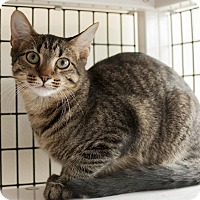 Adopt A Pet :: Frost Top - Chicago, IL