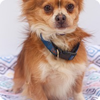 Adopt A Pet :: Yogi - Loomis, CA