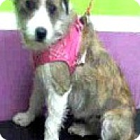 Adopt A Pet :: Faith - Boulder, CO
