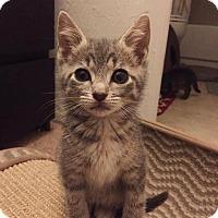Adopt A Pet :: Sora - Gainesville, FL