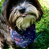 Adopt A Pet :: Little Buddy (RBF) - Spring Valley, NY