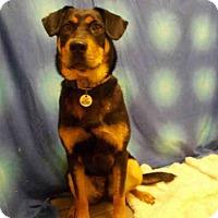 Adopt A Pet :: BOO - Upper Marlboro, MD