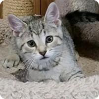 Adopt A Pet :: Baby Julian - Harrisburg, PA