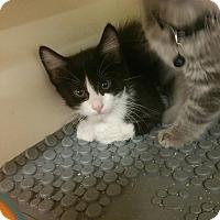 Adopt A Pet :: Peter - Ogden, UT